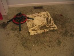 Carpet Cleaning Service Westchester NY